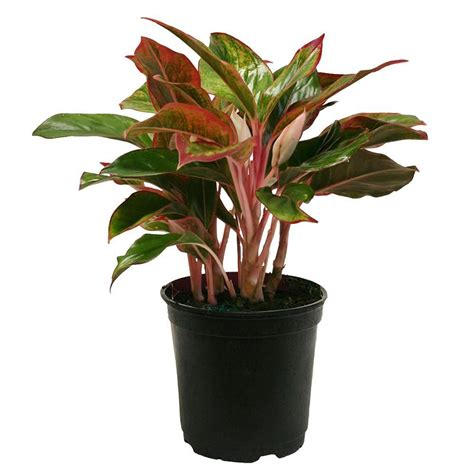 plant l home depot does home depot sell plants home design 2017