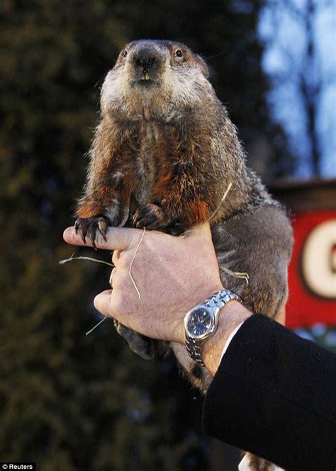 groundhog day uk tv groundhog day 2012 puxatawny phil predicts 6 more weeks