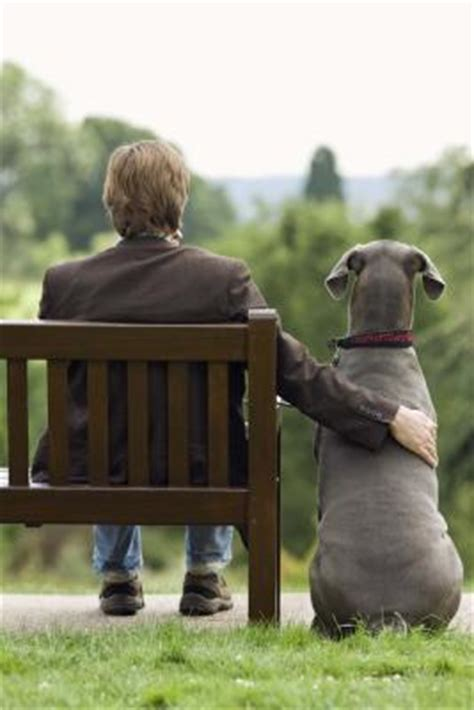 best temperament dogs the best temperament breeds pets