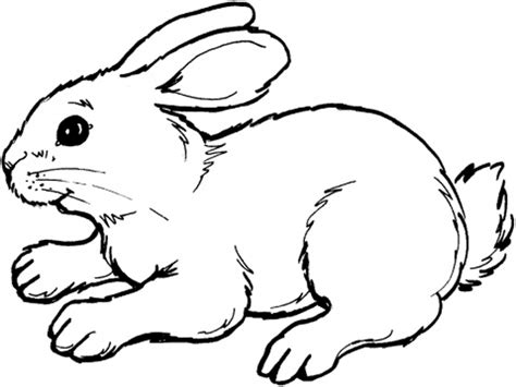 easter bunny coloring pages bunny rabbit coloring page