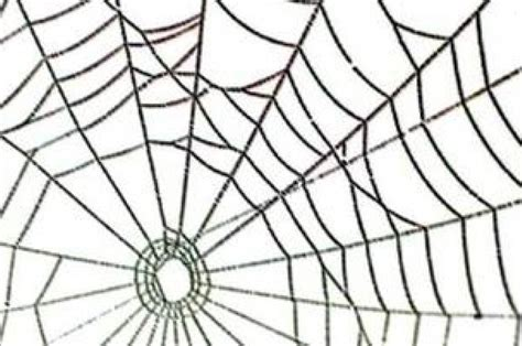 free web clipart spider web clipart clipartion