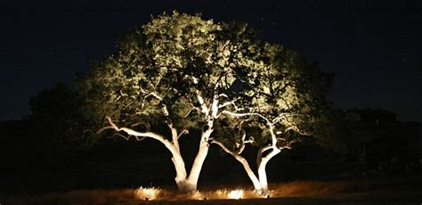 tree of lights pics outdoor lighting hire melbourne outdoor lighting installations