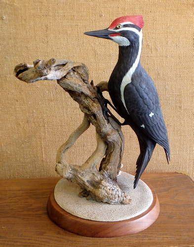 pileated woodpecker carving  tom ahern wood carvings