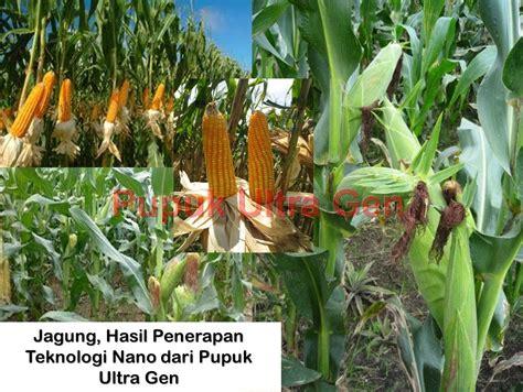 Murah Pupuk Organik Untuk Pertumbuhan Tanaman Buah pupuk organik ultra pupuk ultra pupuk hayati