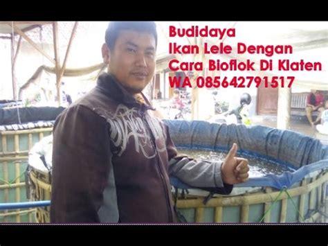 Bibit Lele Klaten budidaya ikan lele dengan cara bioflok di klaten hub wa