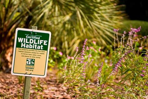certified backyard habitat learn how to turn your property into a certified wildlife