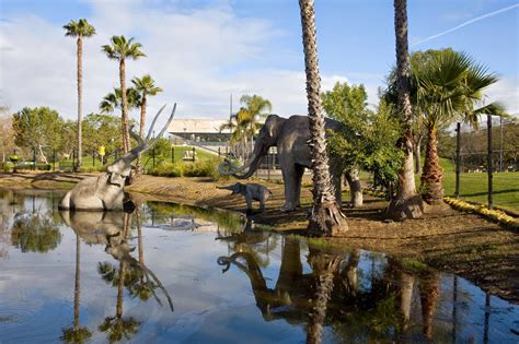 miss history travels to la tar pits museum books questioning answers in genesis geological traps and