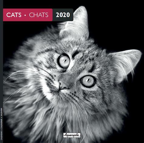 buy aquarupella  wall calendar cats black white  mighty ape nz