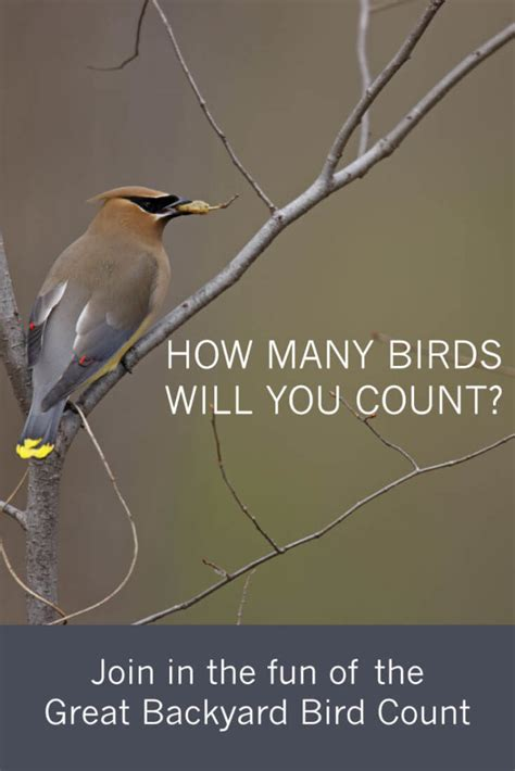 join in the fun of a national bird count tara wildlife