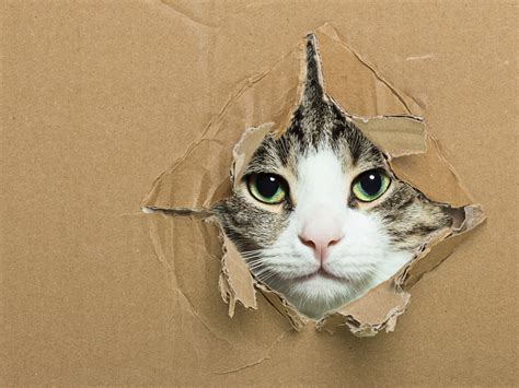 why do cats like boxes mental floss