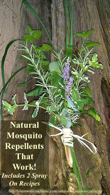 natural mosquito repellents mosquitoes mosquito control and insect repellent on pinterest