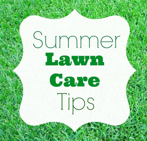 Summer Lawn Care Tips | summer lawn care tips homes com