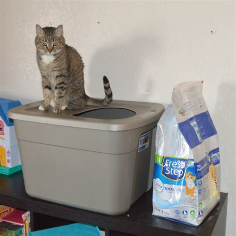 How To Keep Cat Litter The Floor by Diy Covered Cat Litter Box As Leels