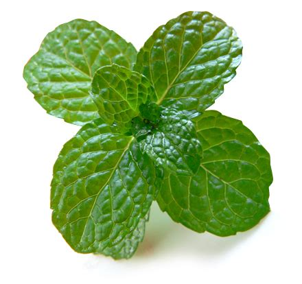 best bourbon for mint julep drink recipe how to make the best mint julep iwa wine