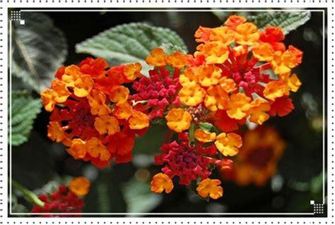 bunga terindah  dunia ilmu pengetahuan carapedia