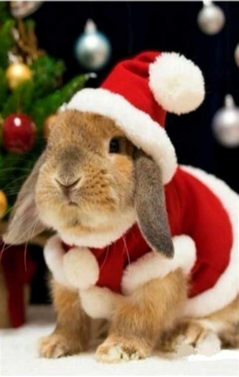 images of christmas rabbits so beatiful bunny i love it bunnies pinterest bunny
