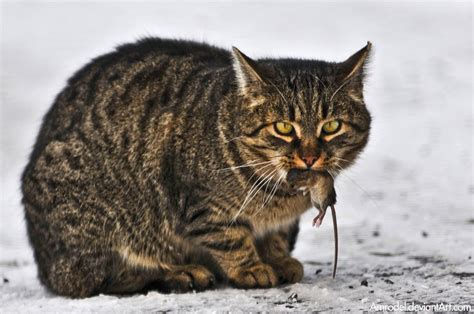 mousy cats and sheepish coyotes the science of animal personalities books a more in depth review of why cats are obligate carnivores