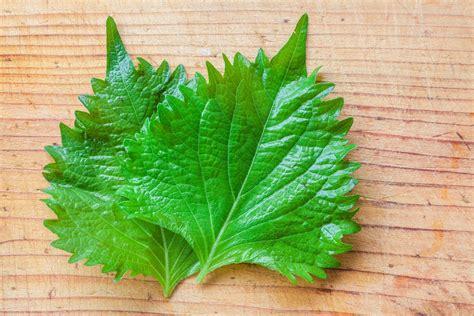 top 28 substitute for basil leaves marjoram