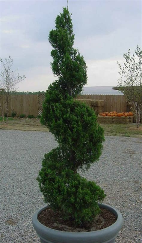 plant material services