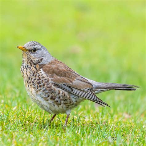 where do garden birds go in winter garden ftempo