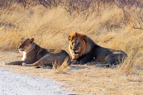 Lustige reisebeschwerden zu viele wilde tiere in der wildnis anemina travels