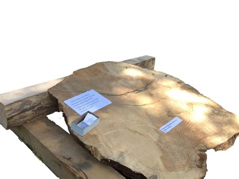 Live Edge Lumber Slabs And Diys Firewood Solutions And