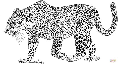 leopard color leopard 6 coloring page free printable coloring pages