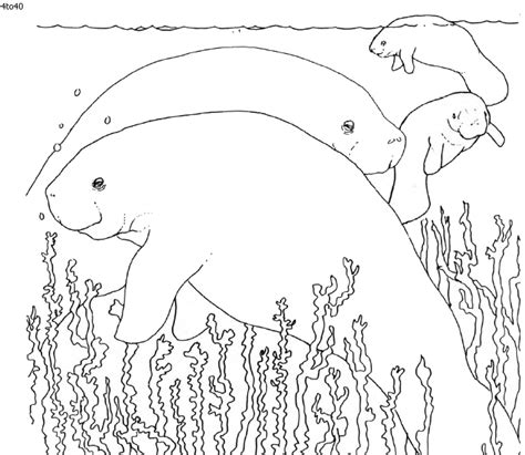 india animals coloring pages 91 india animals coloring pages animal coloring