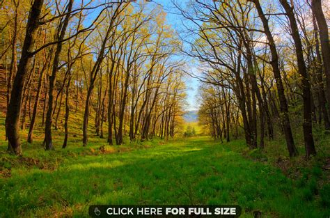 Best Backyard Trees For Privacy Relaxing Wallpapers Photos And Desktop Backgrounds For