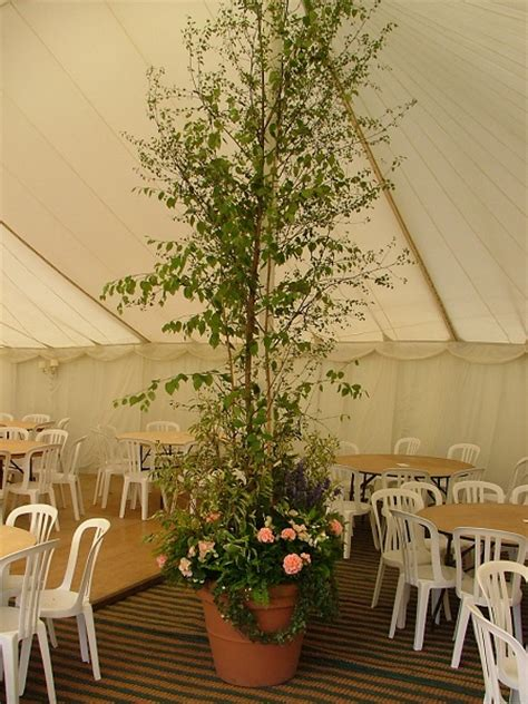 Wedding Hire by And Wedding Hire Superplants
