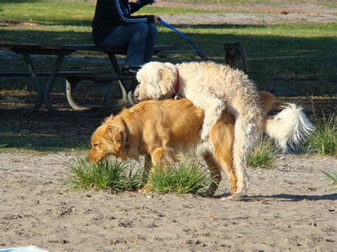 what to do when your puppy humps the friday 5 5 why dogs are like boyfriends witty pretty