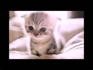 Gatitos y perritos kawaii youtube