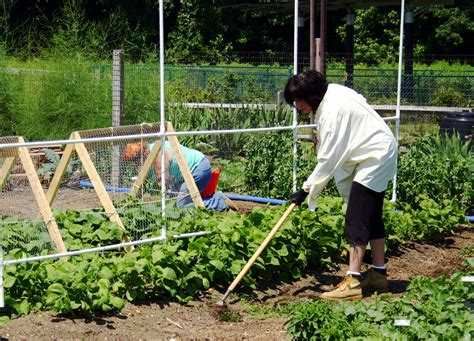 Gardening In Middlesex County Master Gardener Program Now Enrolling