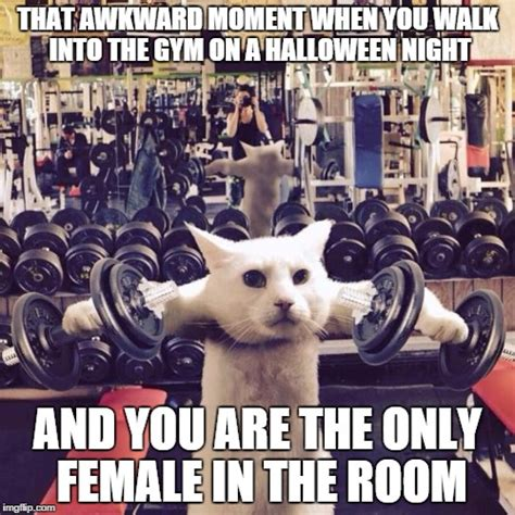 Cat Gym Meme - gym cat imgflip