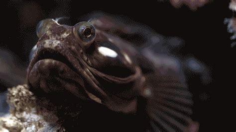 Gif Animals Science Sharks Biology Marine Biology Behavior - animated gifs from the monterey bay aquarium