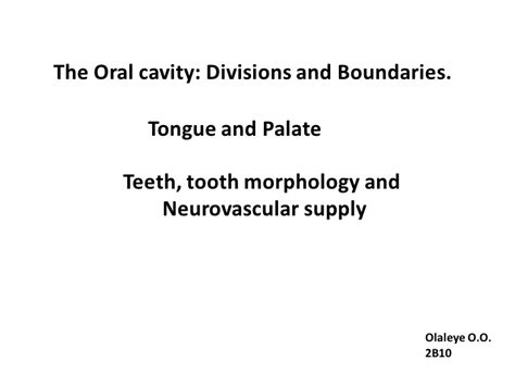 anatomy of the tongue slideshare oral cavity the divisions and boundaries