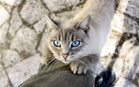 Cat Eye Blue Berkualitas light blue cat wallpaper 2880x1800 13643