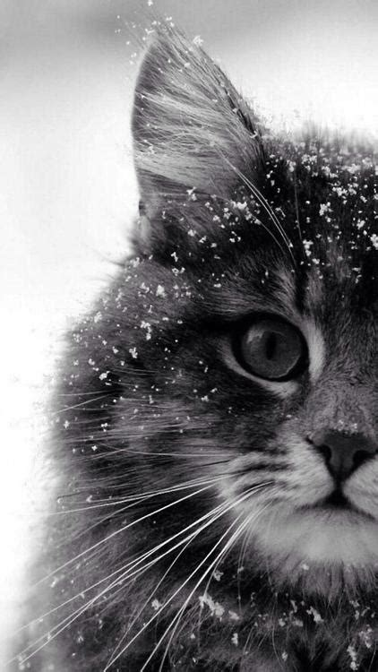 Cat Wallpaper We Heart It | cutencats cat sur we heart it 192 d 233 couvrir