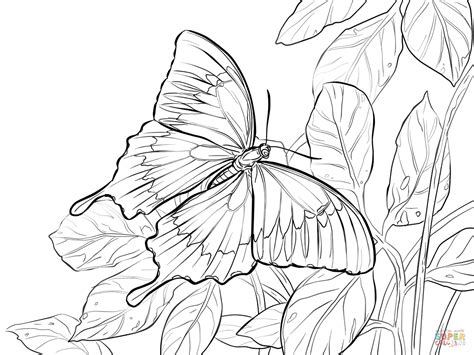 zebra butterfly coloring page zebra butterfly coloring pages