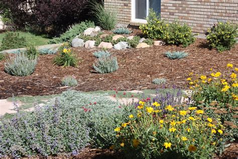 xeriscape ideas for your yard reno landscaping