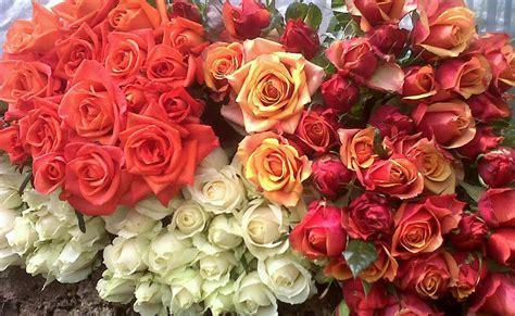 Bunga Jalar Hitam 02 bunga mawar lambang perjalanan kehidupan anggreknusantara