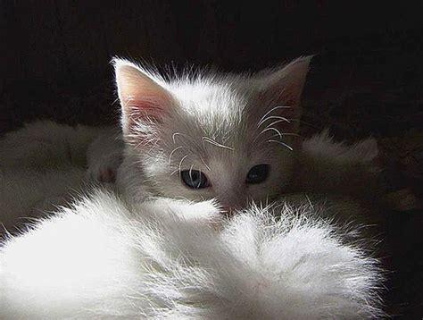 webshots cats webshots cats newhairstylesformen2014 com