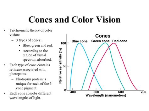 according to the trichromatic theory of color vision receptors and sensation ppt
