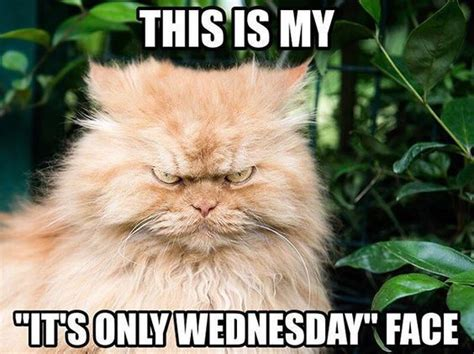 Happy Wednesday Meme - best 25 wednesday hump day ideas on pinterest hump day