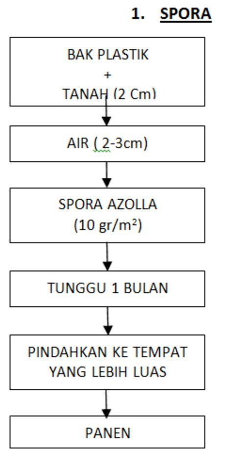 Furadan 5gr metode budidaya azolla sebagai sumber pakan alternatif