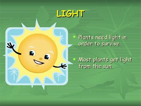 plants that survive with no light plants that survive with no light what plants need we