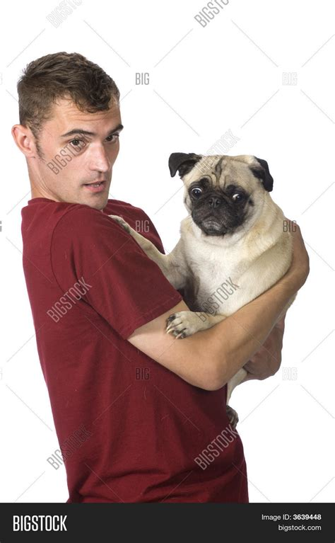 scared pug holding scared pug image photo bigstock