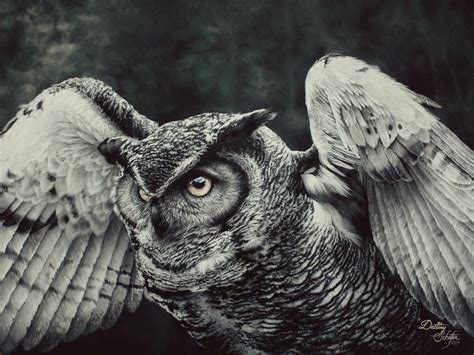 owl painting by straewefin on deviantart
