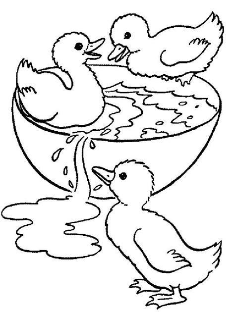 duck coloring pages   print duck coloring pages