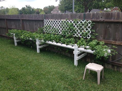 Diy Garden Trellis Ideas Aquaponics Page 2 Nat S Blog